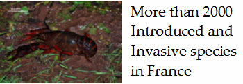 Invasive-plants-insects-fish-mammals-France