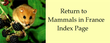 French-mammals-species-index