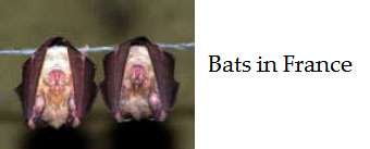About-bats-in-France-and-conservation