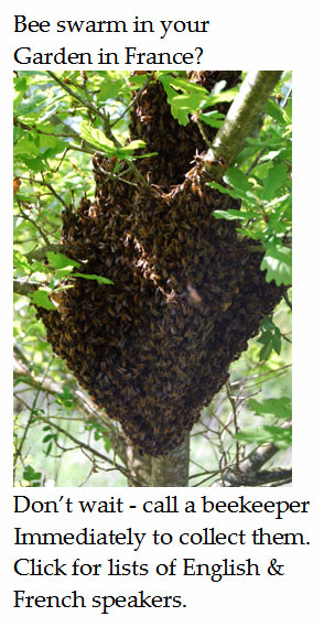 help-with-bee-swarm-france-English