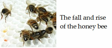 The-fall-and-rise-of-the-honey-bee