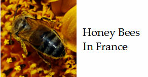 Bees-and-honey-in-france